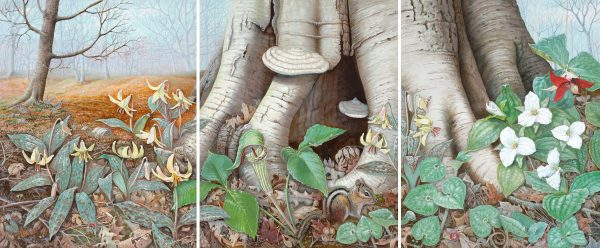 Woodland Wildflowers Triptych
